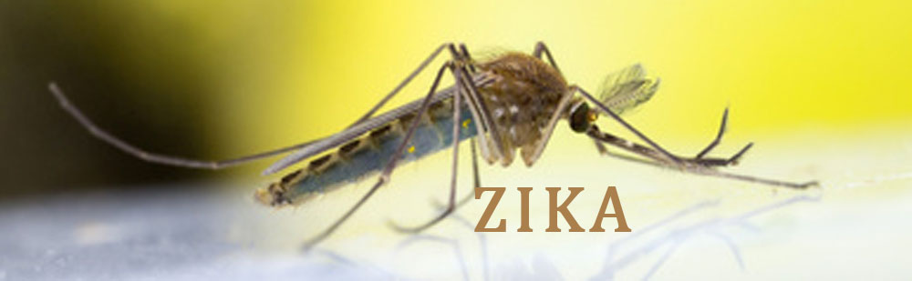 Zika Virus in Cayman Islands